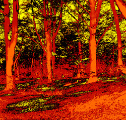 middleton woods, yorks