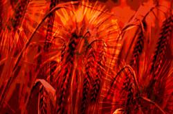 wheat print 8