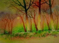 Moonlight woods