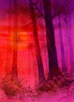 nocturne woods 6