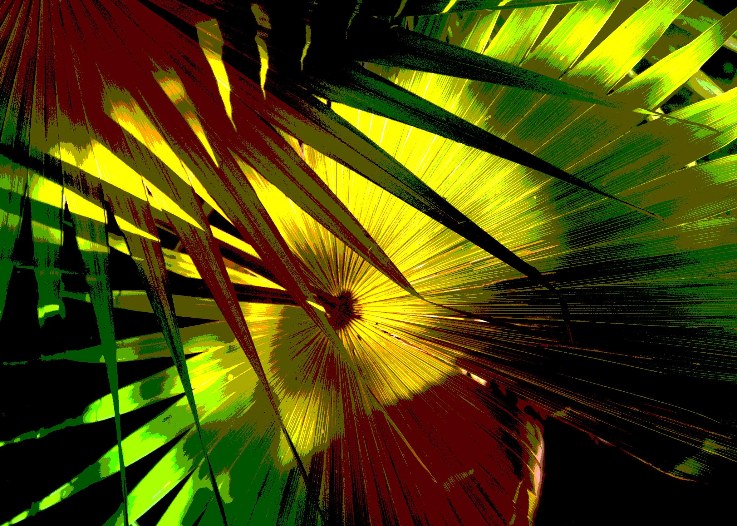 fan palm 8