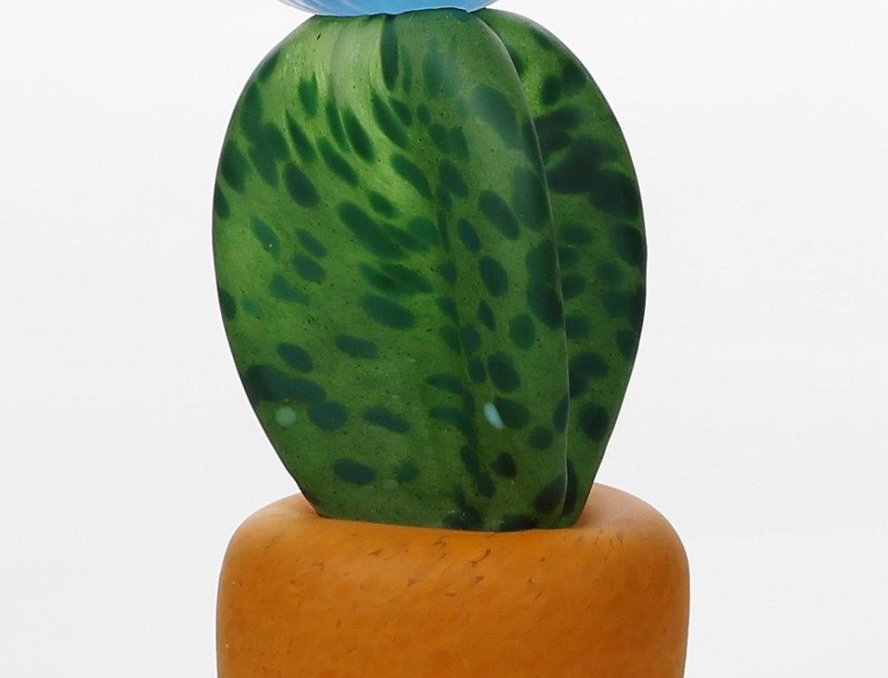 Cactus Azzurro