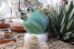 Cactus Salina