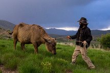 water-buffalo-1.jpeg