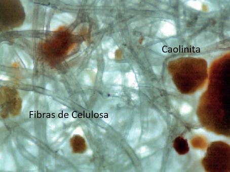 Cuando la biología y la geología se encuentran: El papel de la caolinita
