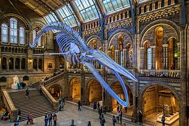 UNA STORIA OLOGRAFICA AL NATURAL HISTORY MUSEUM DI LONDRA