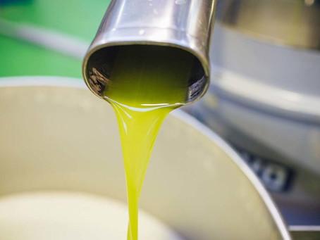 Zu Besuch bei unserem Olivenölproduzenten