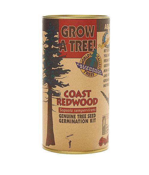 Coast Redwood - Seed Grow Kit