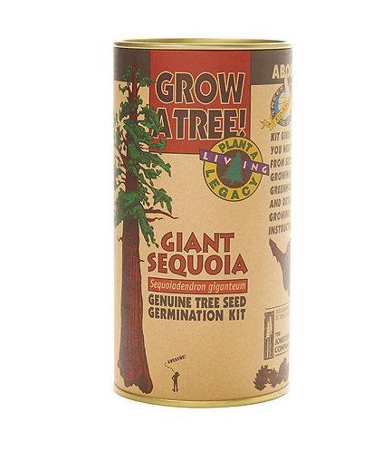 Giant Sequoia - Seed Grow Kit