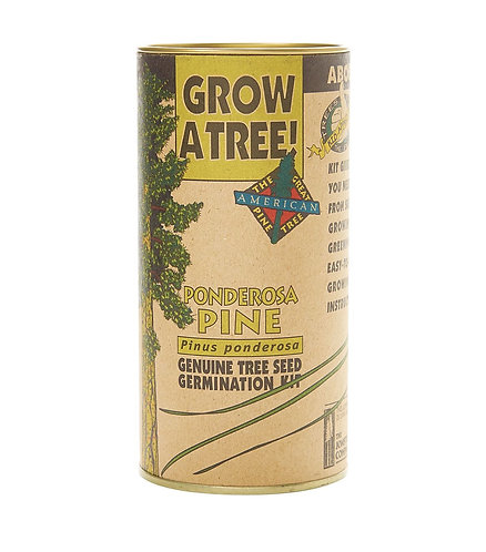 Ponderosa Pine - Seed Grow Kit