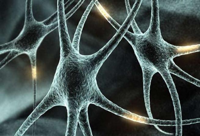 imagen_de_las_neuronas_cerebrales