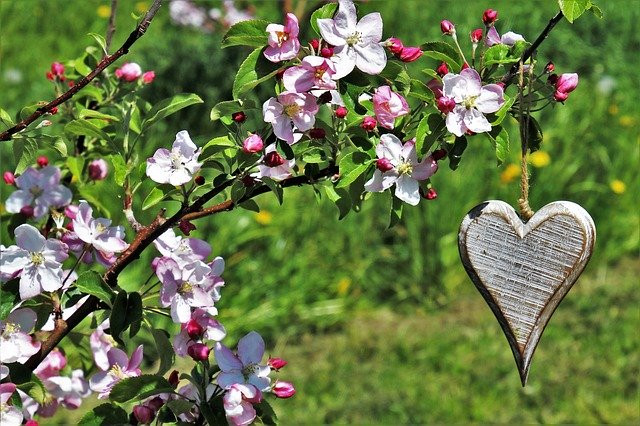 Wooden Heart hanging from Flower Plant Outdoors