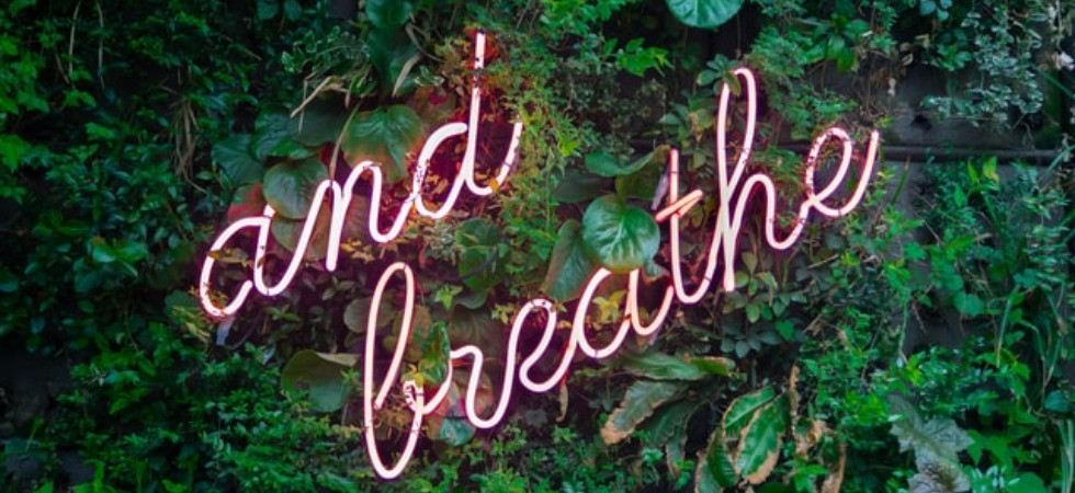 "Image of the words ""and breathe"" on a wall of shrubbery"