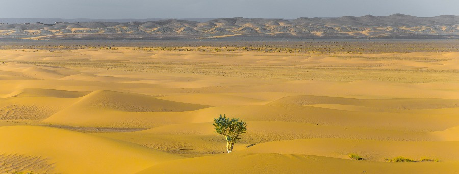 Tree in the desert