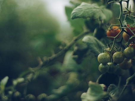 ¿Qué es la gastronomía sostenible?