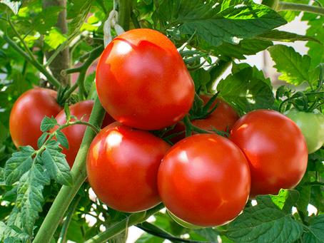 Dieta basada en vegetales mejoraría tu salud cardíaca