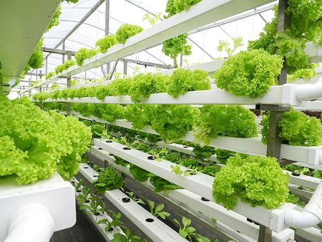 Fincas verticales podrían ser una solución alimentaria en Latinoamérica