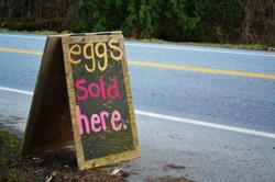 eggs 4 sale