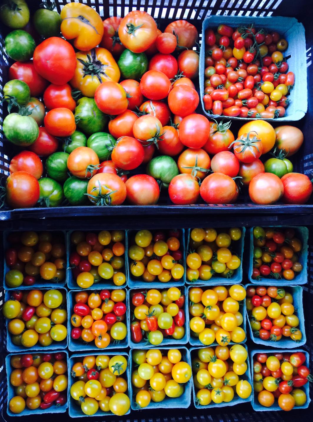 tomatoes 1_edited