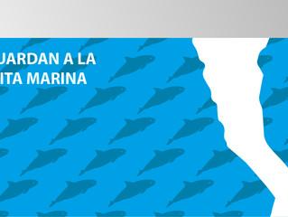 Baja California continúa esfuerzos en la preservación de la vaquita marina.