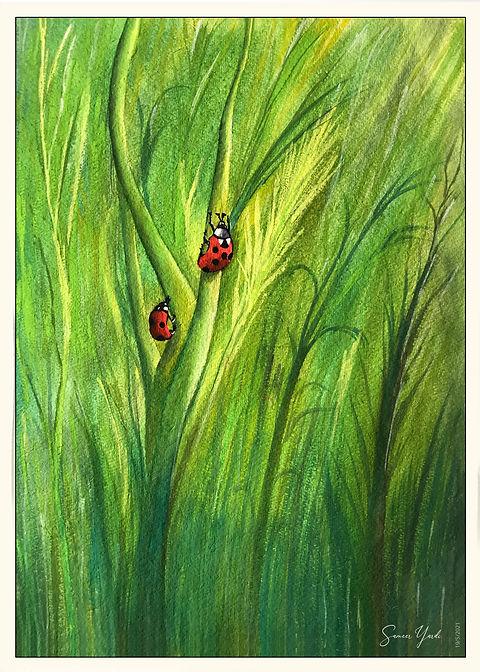 Ladybugs Beetel & Grassland copy.jpg
