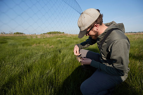 Evan-Extracting-Bird-From-Net-Banding-26