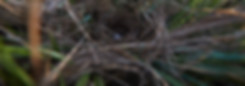 Nest-One-Egg-Banding 12 June_007-strip.j