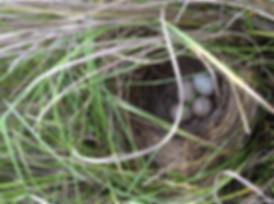 SALS-Nest-w-Grass-image1-17.jpg