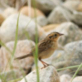 Juvenile-SALS-image10-35-480square.png