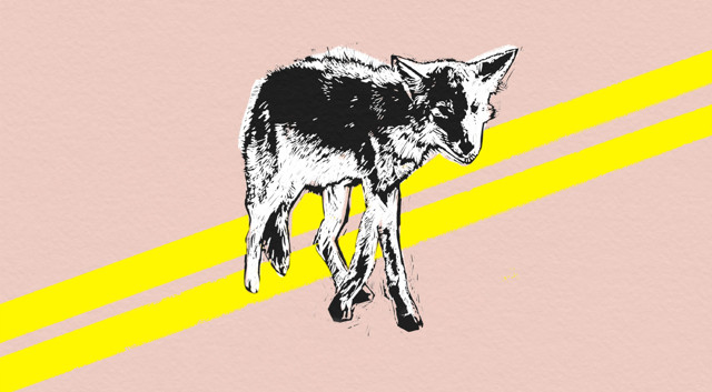 Coyote by John Calvin Abney