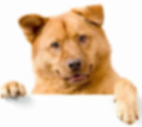 dogpaw.jpg