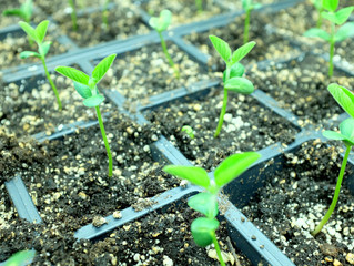 AgBiome Granted Award to Discover Biological Solutions to Diseases Affecting African Crops