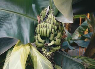 Tropic Biosciences banks $28.5m in Temasek-led Series B for gene-editing, RNAi approach