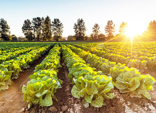Foraging for Opportunities in the Food Production Sector