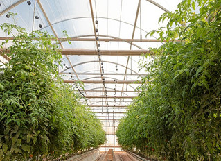 LA's Burgeoning Agtech Industry Sees Green Acres Ahead