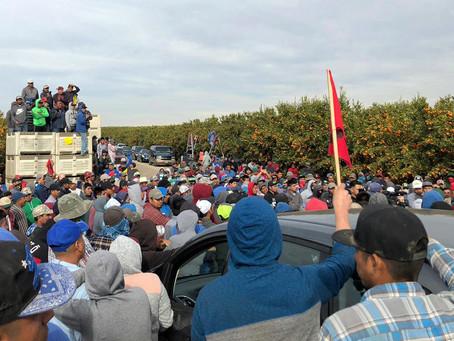 The Farmworkers Who Pick Your Halo Mandarins Just Organized a Massive Labor Strike
