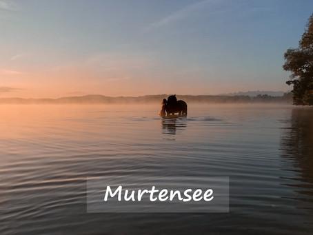 Pferdeshooting am Murtensee
