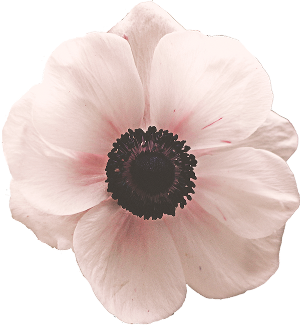 Anemone.png