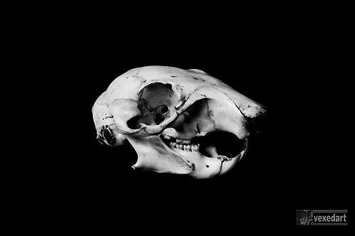 skull art photography fine art prints
