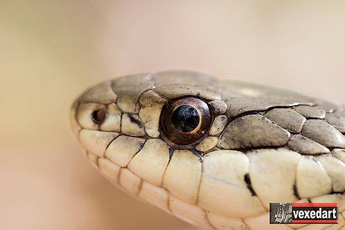 Snake Eyes | Macro Photography