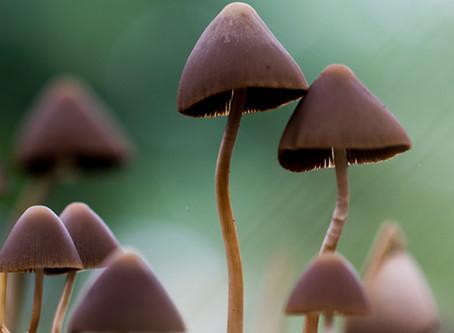 Mushroom Macro Photography Print Series