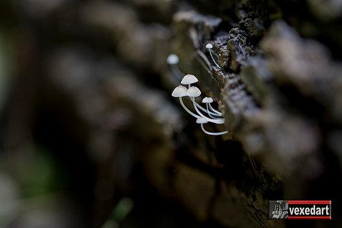 Tiny White Mushrooms Growing from Tree | Macro Mushroom Photography IV