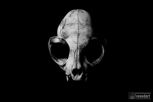 cat skull art photography print