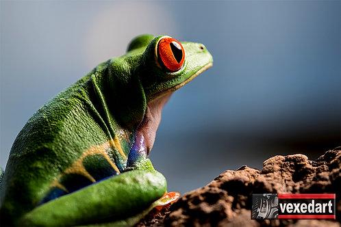Tree Frog | Macro Photography