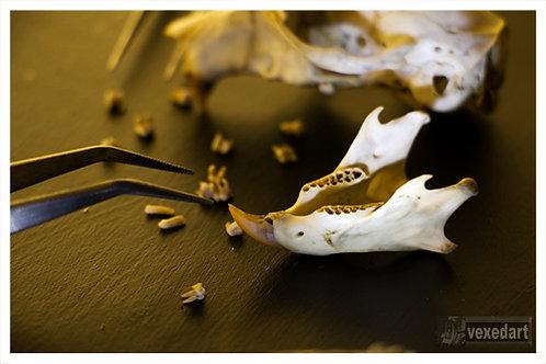 skull photography | animal bones fine art photos