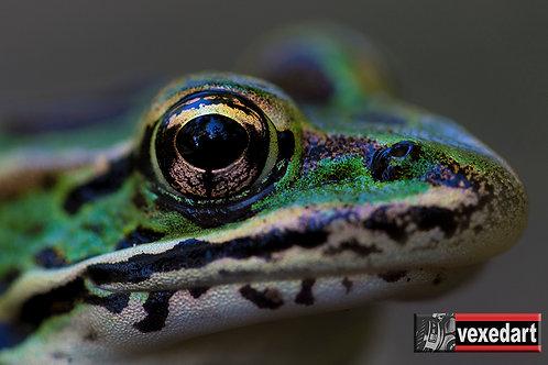 Frog Eyes | Macro Photography