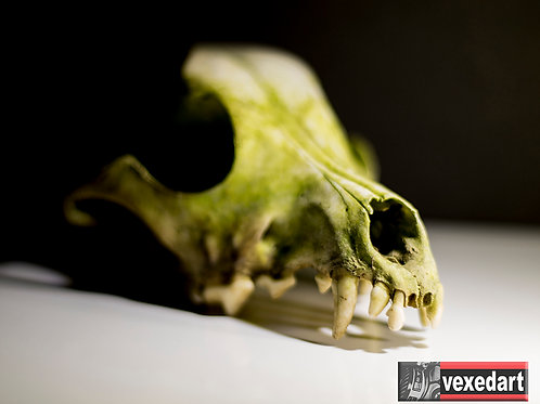 Teeth | Macro Photography