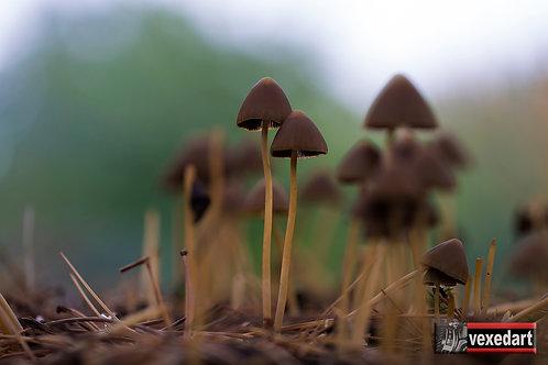 Tall Mushrooms Growing | Macro Mushroom Photography VI