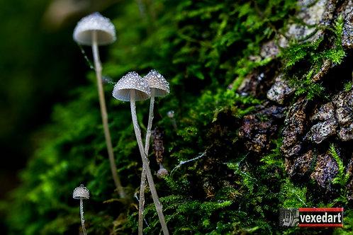 Mushrooms Dew Drops | Macro Mushroom Photography III