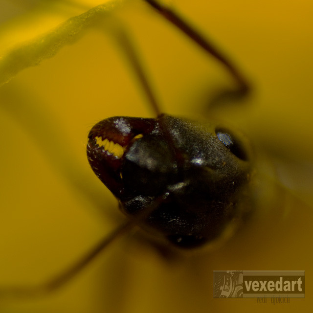 An Ant close up and personal | ant teeth
